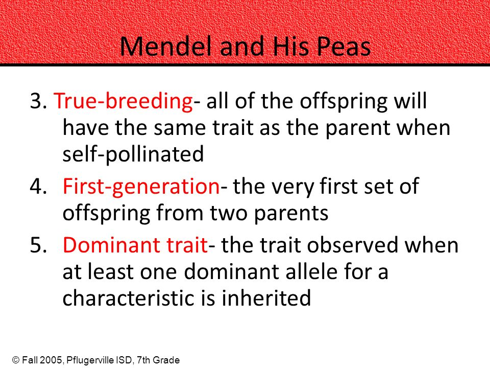 © Fall 2005, Pflugerville ISD, 7th Grade Mendel and His Peas 3. True-breeding- all of the offspring will have the same trait as the parent when self-p