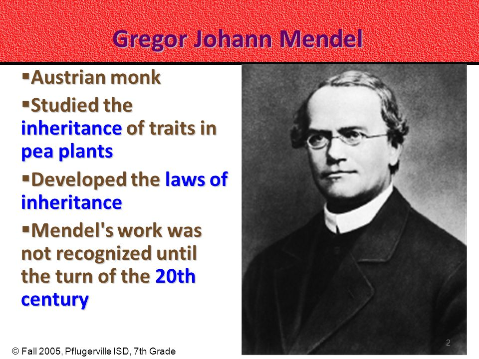 © Fall 2005, Pflugerville ISD, 7th Grade Gregor Johann Mendel Austrian monk Austrian monk Studied the inheritance of traits in pea plants Studied the inheritance of traits in pea plants Developed the laws of inheritance Developed the laws of inheritance Mendel s work was not recognized until the turn of the 20th century Mendel s work was not recognized until the turn of the 20th century 2