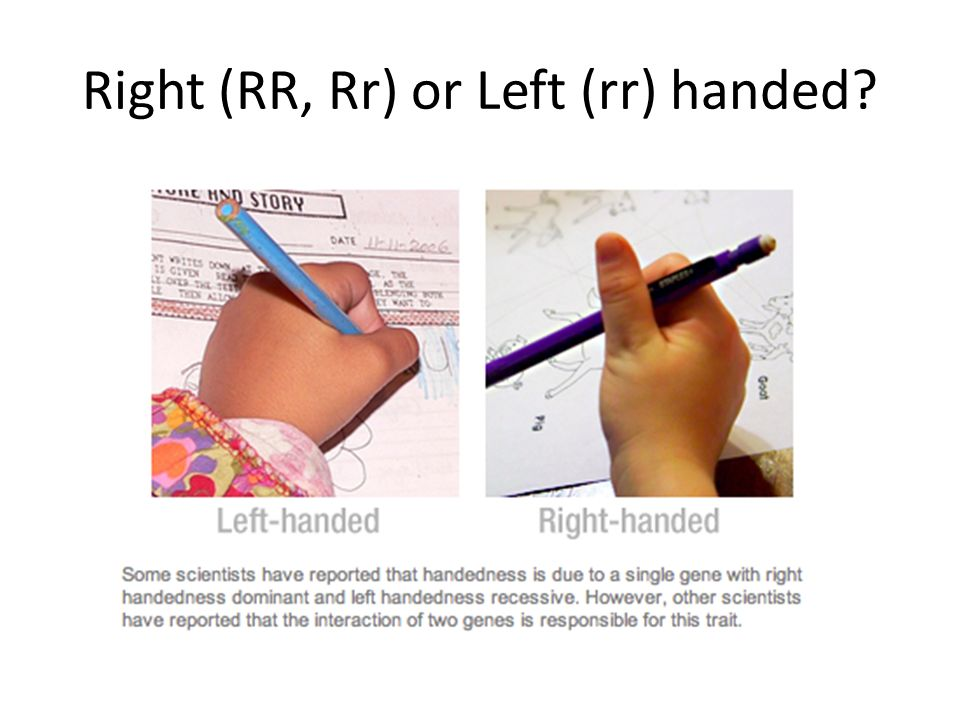 Right (RR, Rr) or Left (rr) handed?