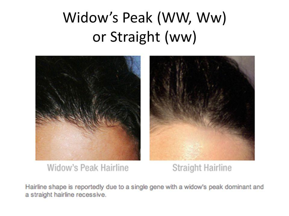 Widows Peak (WW, Ww) or Straight (ww)