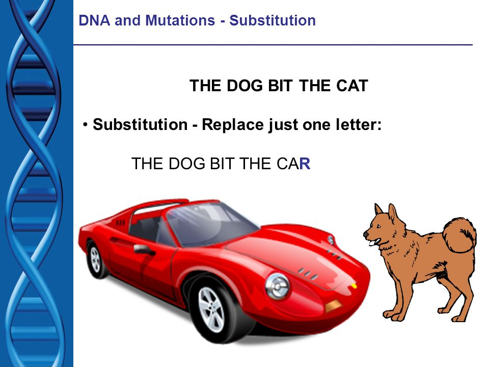 DNA and Mutations - Substitution THE DOG BIT THE CAT Substitution - Replace just one letter: THE DOG BIT THE CAR