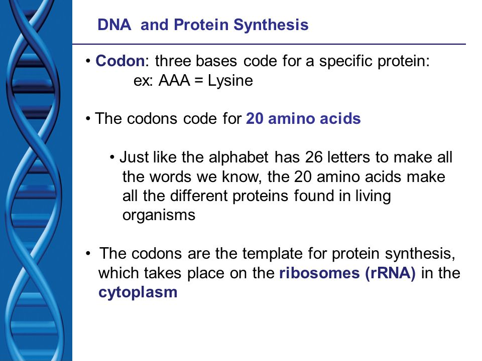Codon: three bases code for a specific protein: ex: AAA = Lysine The codons code for 20 amino acids Just like the alphabet has 26 letters to make all