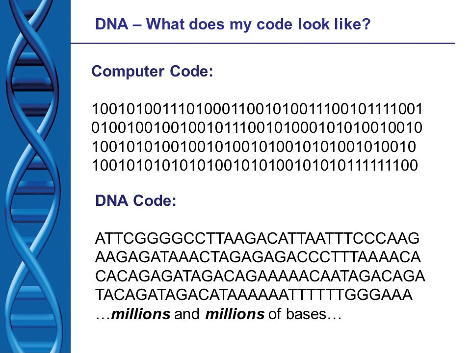 DNA – What does my code look like? Computer Code: 100101001110100011001010011100101111001 01001001001001011100101000101010010010 100101010010010100101