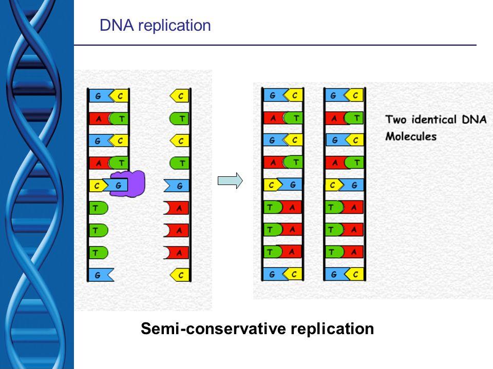 DNA replication Semi-conservative replication