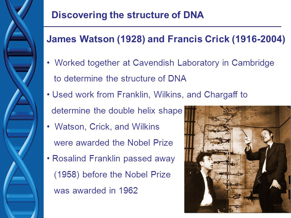 Discovering the structure of DNA James Watson (1928) and Francis Crick (1916-2004) Worked together at Cavendish Laboratory in Cambridge to determine t