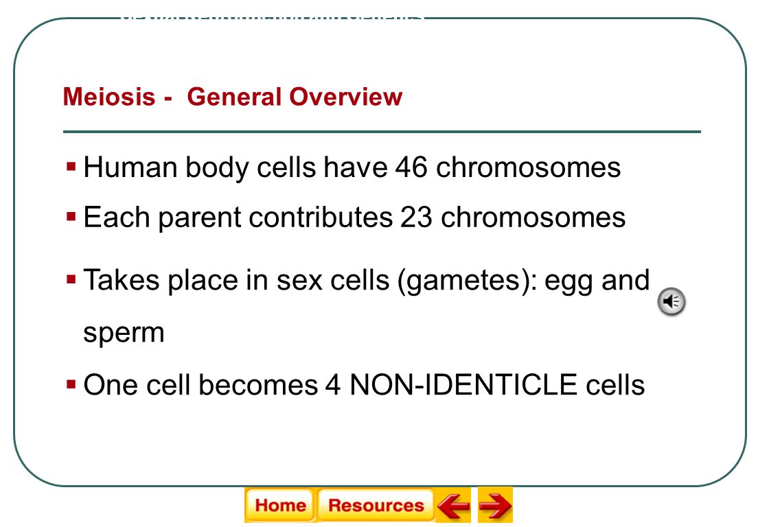 Human body cells have 46 chromosomes Meiosis - General Overview Sexual Reproduction and Genetics Each parent contributes 23 chromosomes Takes place in sex cells (gametes): egg and sperm One cell becomes 4 NON-IDENTICLE cells