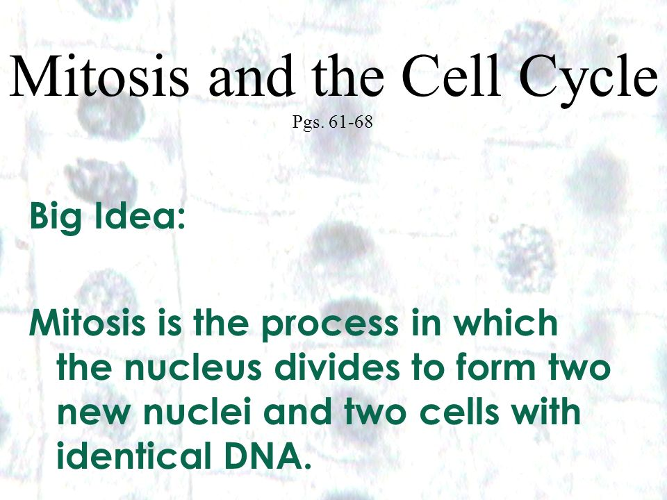 1 1 Mitosis and the Cell Cycle Pgs. 61-68 Big Idea: Mitosis is the process in which the nucleus divides to form two new nuclei and two cells with iden