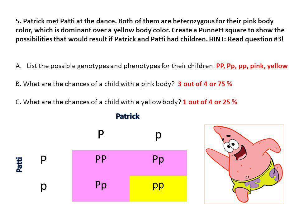 5. Patrick met Patti at the dance. Both of them are heterozygous for their pink body color, which is dominant over a yellow body color. Create a Punne