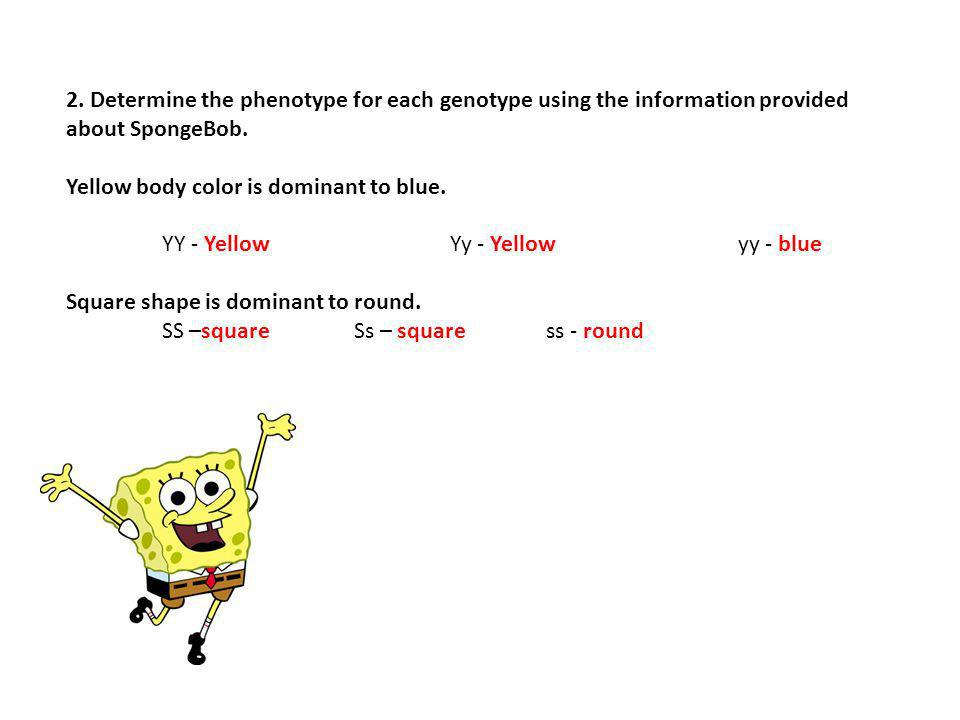 2. Determine the phenotype for each genotype using the information provided about SpongeBob. Yellow body color is dominant to blue. YY - YellowYy - Ye