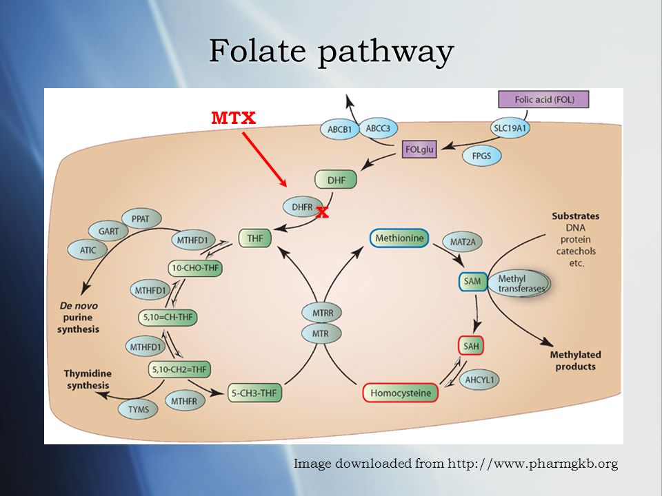 Folate pathway Image downloaded from http://www.pharmgkb.org MTX X X