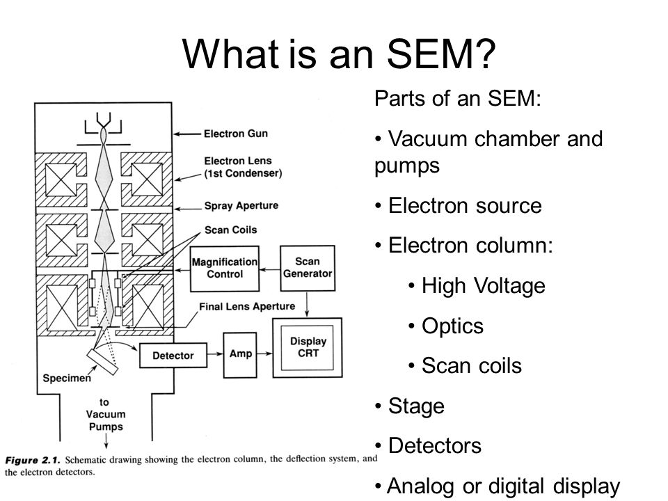 What is an SEM? Parts of an SEM: Vacuum chamber and pumps Electron source Electron column: High Voltage Optics Scan coils Stage Detectors Analog or di