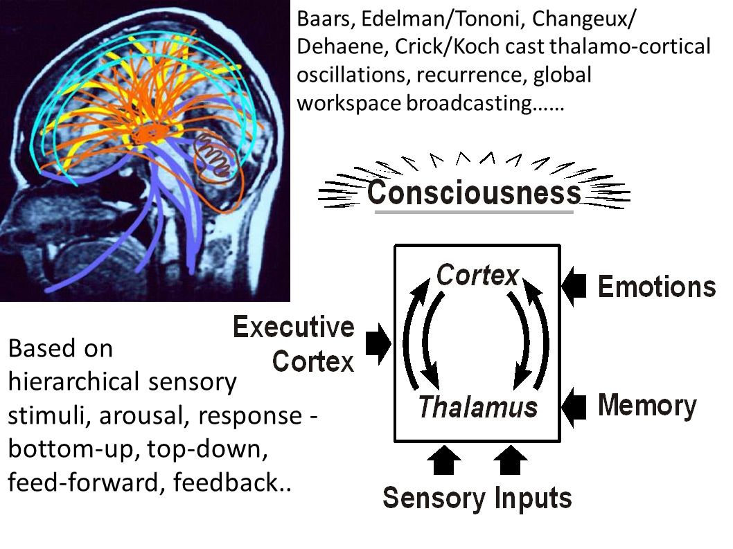 The best neurophysiological correlate of consciousness (NCC) comes from EEG, voltage fluctuations recorded from scalp or brain surface.