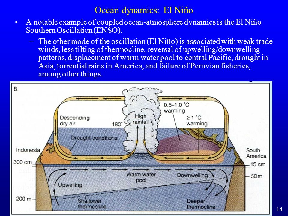 Ocean dynamics: El Niño A notable example of coupled ocean-atmosphere dynamics is the El Niño Southern Oscillation (ENSO). –The other mode of the osci