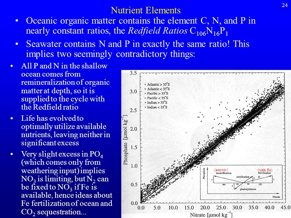 Nutrient Elements Oceanic organic matter contains the element C, N, and P in nearly constant ratios, the Redfield Ratios C 106 N 16 P 1 Seawater conta