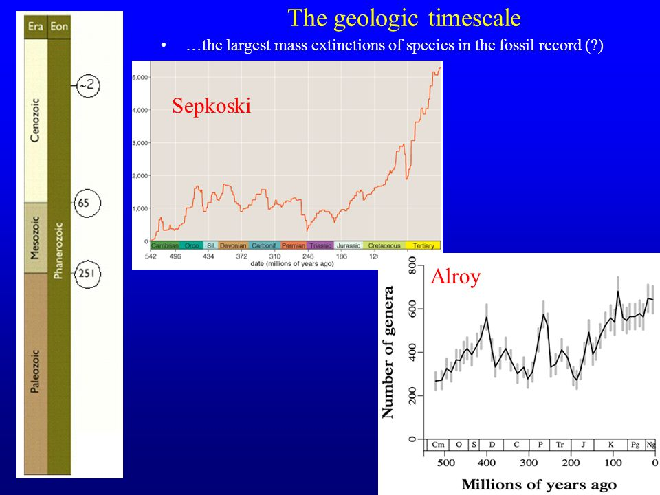 29 The geologic timescale …the largest mass extinctions of species in the fossil record (?) Sepkoski Alroy