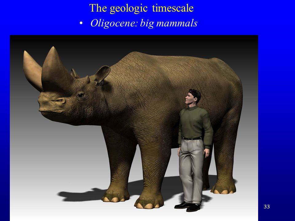 33 The geologic timescale Oligocene: big mammals