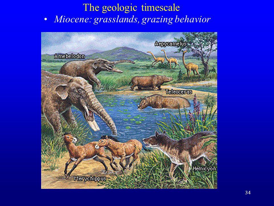 34 The geologic timescale Miocene: grasslands, grazing behavior