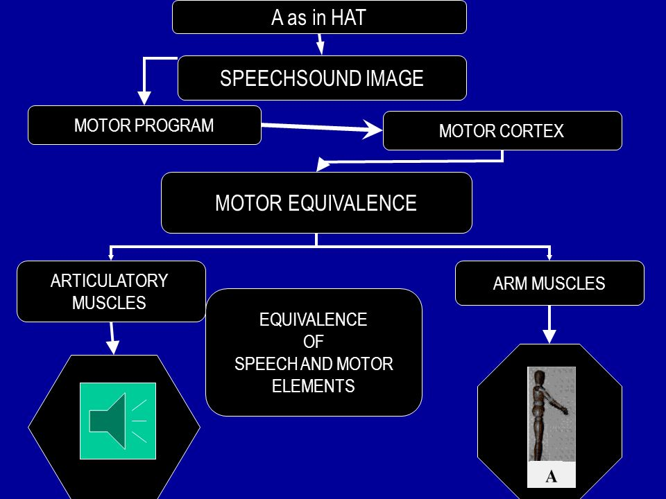 MOTOR EQUIVALENCE IN RELATION TO SPEECH