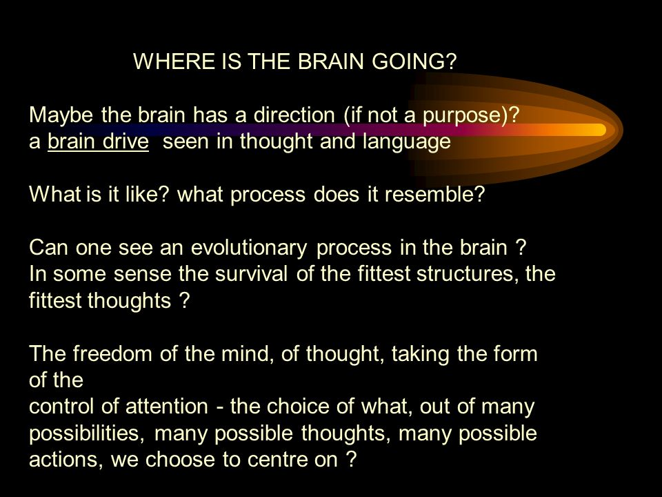 WHERE IS THE BRAIN GOING.Maybe the brain has a direction (if not a purpose).
