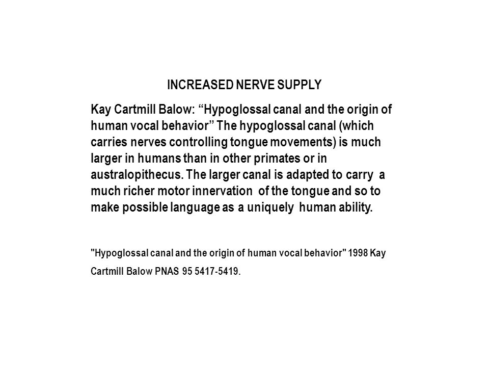 INCREASED NERVE SUPPLY Kay Cartmill Balow: Hypoglossal canal and the origin of human vocal behavior The hypoglossal canal (which carries nerves controlling tongue movements) is much larger in humans than in other primates or in australopithecus.
