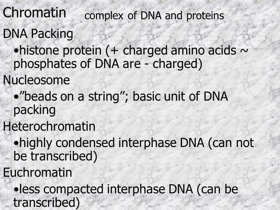 Chromatin DNA Packing histone protein (+ charged amino acids ~ phosphates of DNA are - charged) Nucleosome beads on a string; basic unit of DNA packin
