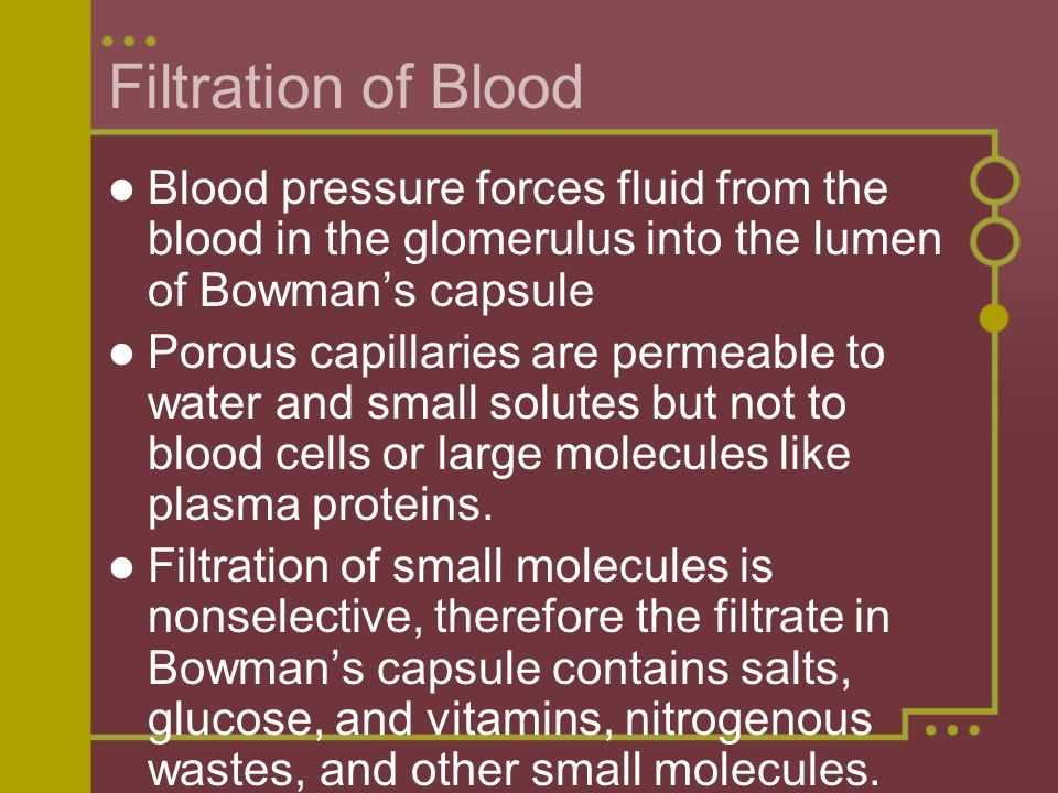 Filtration of Blood Blood pressure forces fluid from the blood in the glomerulus into the lumen of Bowmans capsule Porous capillaries are permeable to