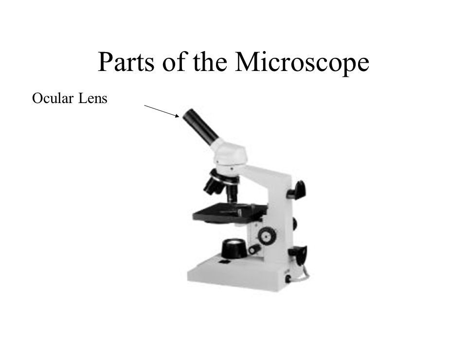 Parts of the Microscope Ocular Lens