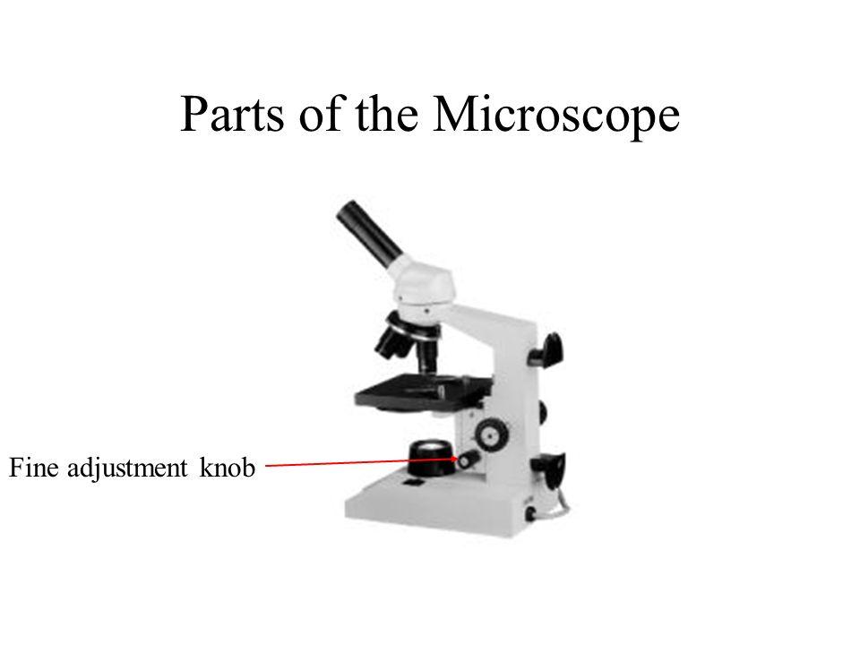 Parts of the Microscope Fine adjustment knob