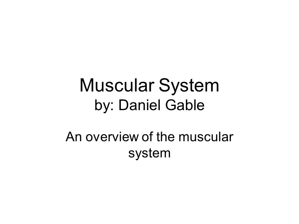 Muscular System by: Daniel Gable An overview of the muscular system