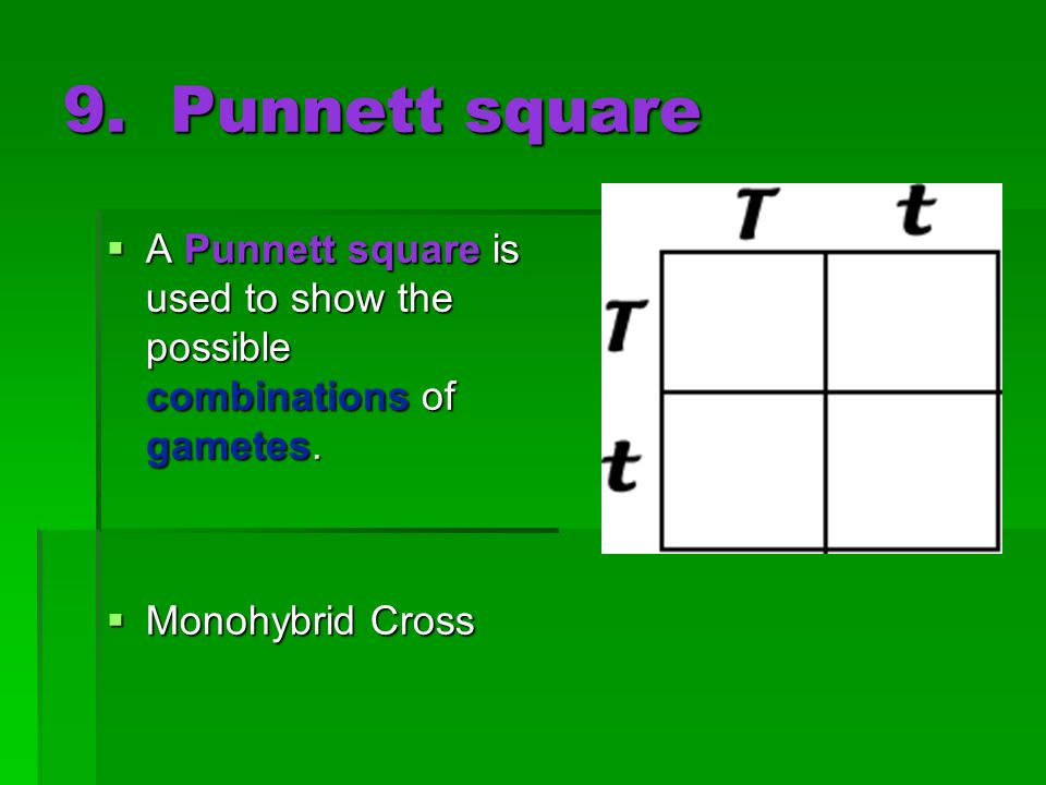 9. Punnett square A Punnett square is used to show the possible combinations of gametes. A Punnett square is used to show the possible combinations of