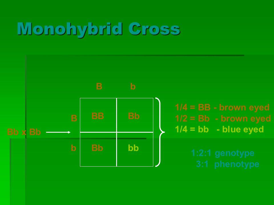 Monohybrid Cross BB Bb bbB b Bb Bb x Bb 1/4 = BB - brown eyed 1/2 = Bb - brown eyed 1/4 = bb - blue eyed 1:2:1 genotype 3:1 phenotype
