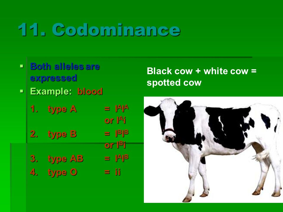 11. Codominance Both alleles are expressed Both alleles are expressed Example: blood Example: blood 1.type A= I A I A or I A i 2.type B= I B I B or I