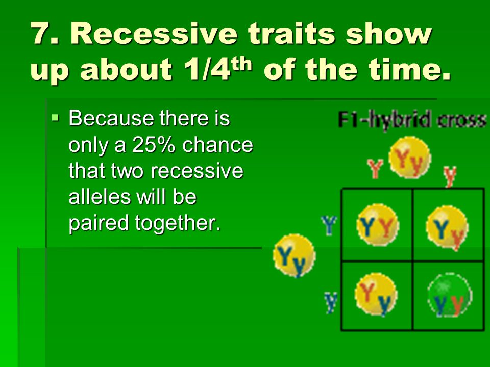 7. Recessive traits show up about 1/4 th of the time. Because there is only a 25% chance that two recessive alleles will be paired together. Because t