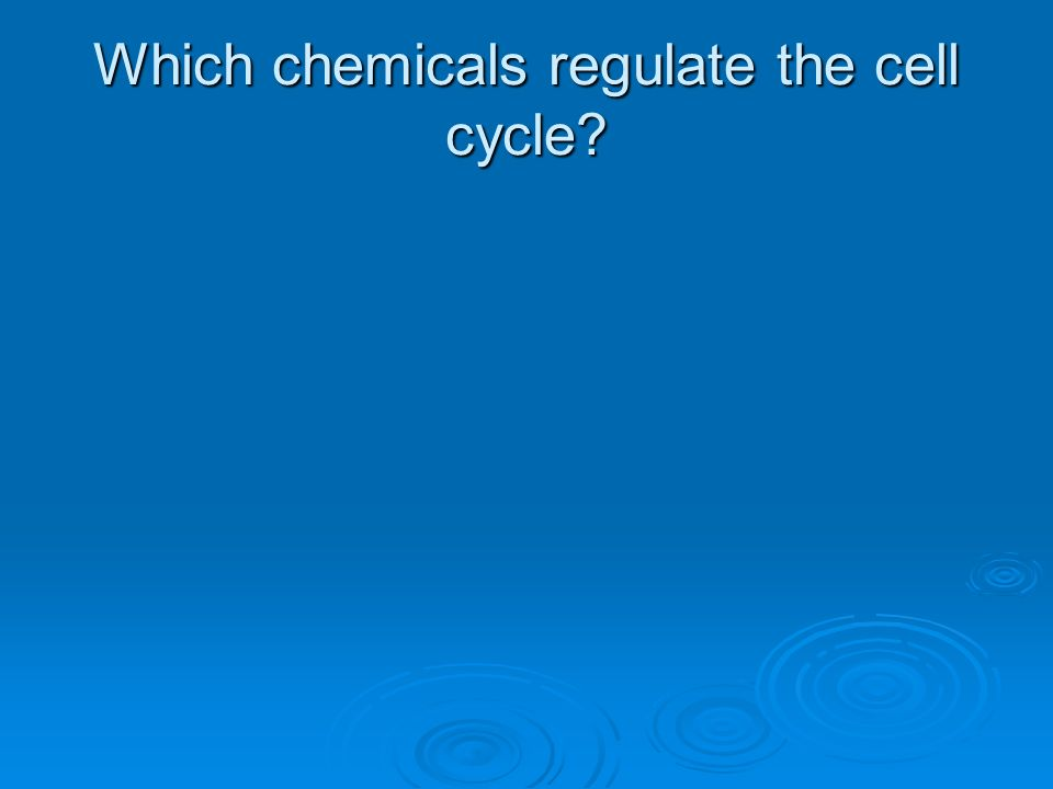 Which chemicals regulate the cell cycle?