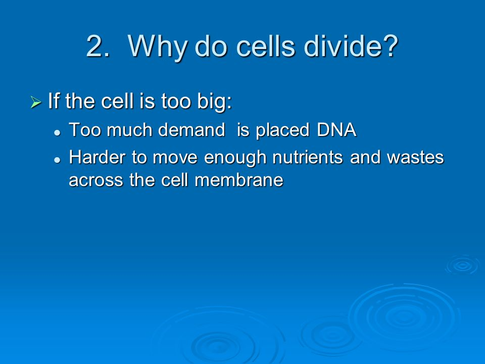 2. Why do cells divide? If the cell is too big: If the cell is too big: Too much demand is placed DNA Too much demand is placed DNA Harder to move eno