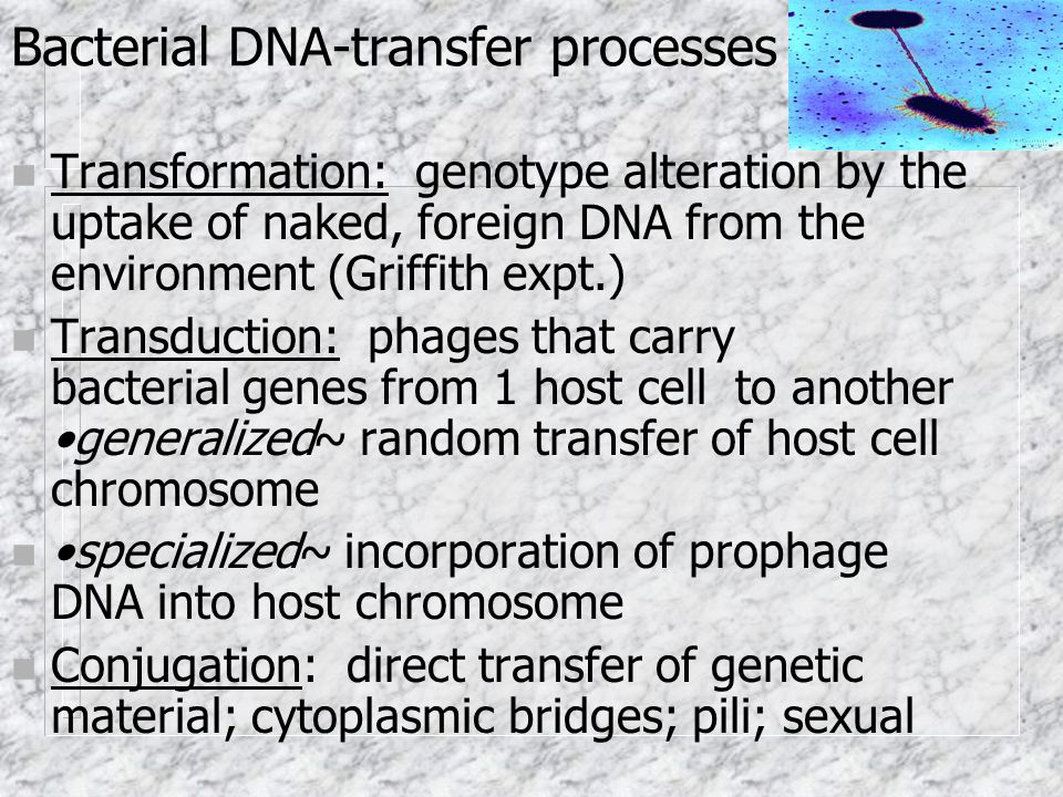 Bacterial DNA-transfer processes n Transformation: genotype alteration by the uptake of naked, foreign DNA from the environment (Griffith expt.) n Transduction: phages that carry bacterial genes from 1 host cell to another generalized~ random transfer of host cell chromosome n specialized~ incorporation of prophage DNA into host chromosome n Conjugation: direct transfer of genetic material; cytoplasmic bridges; pili; sexual