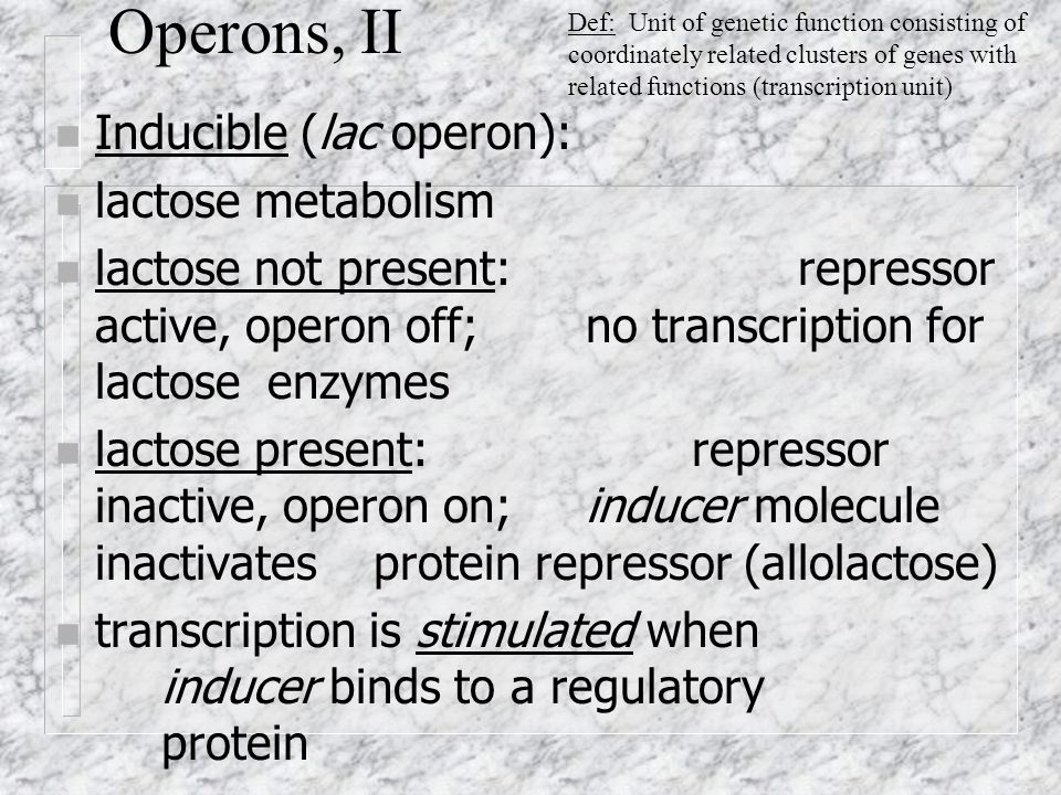Operons, II n Inducible (lac operon): n lactose metabolism n lactose not present: repressor active, operon off; no transcription for lactose enzymes n lactose present: repressor inactive, operon on; inducer molecule inactivates protein repressor (allolactose) n transcription is stimulated when inducer binds to a regulatory protein Def: Unit of genetic function consisting of coordinately related clusters of genes with related functions (transcription unit)