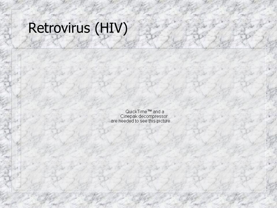 Retrovirus (HIV)