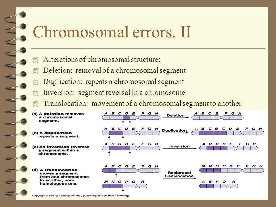 Chromosomal errors, II 4 Alterations of chromosomal structure: 4 Deletion: removal of a chromosomal segment 4 Duplication: repeats a chromosomal segme