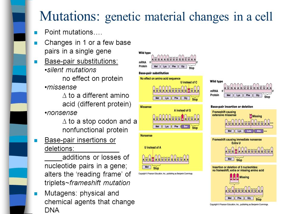 Mutations: genetic material changes in a cell n Point mutations….
