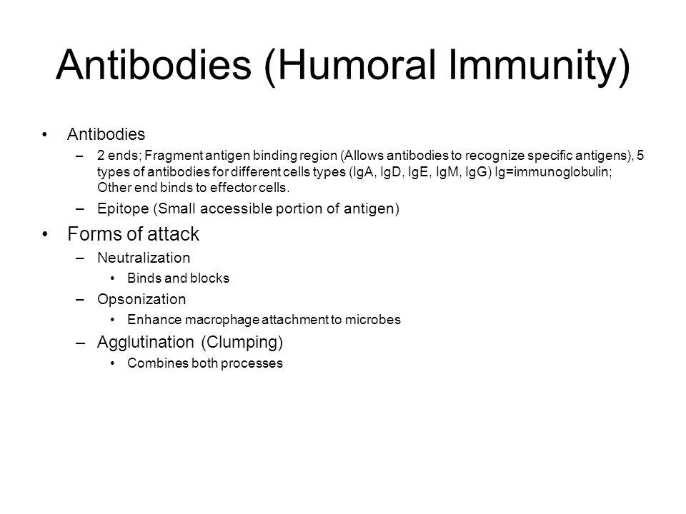 Antibodies (Humoral Immunity) Antibodies –2 ends; Fragment antigen binding region (Allows antibodies to recognize specific antigens), 5 types of antib