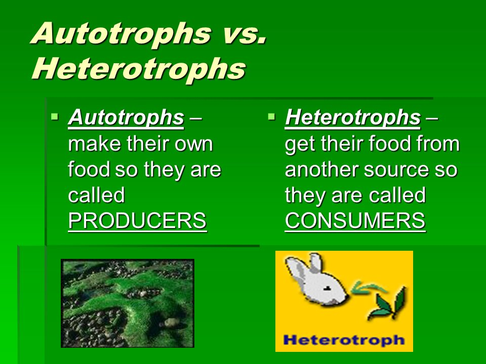 Autotrophs vs. Heterotrophs Autotrophs – make their own food so they are called PRODUCERS Autotrophs – make their own food so they are called PRODUCER