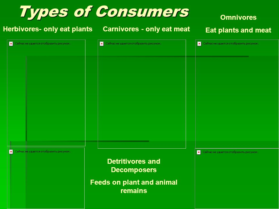 Types of Consumers Herbivores- only eat plantsCarnivores - only eat meat Omnivores Eat plants and meat Detritivores and Decomposers Feeds on plant and