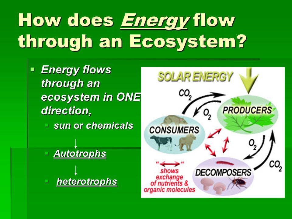 How does Energy flow through an Ecosystem? Energy flows through an ecosystem in ONE direction, Energy flows through an ecosystem in ONE direction, sun