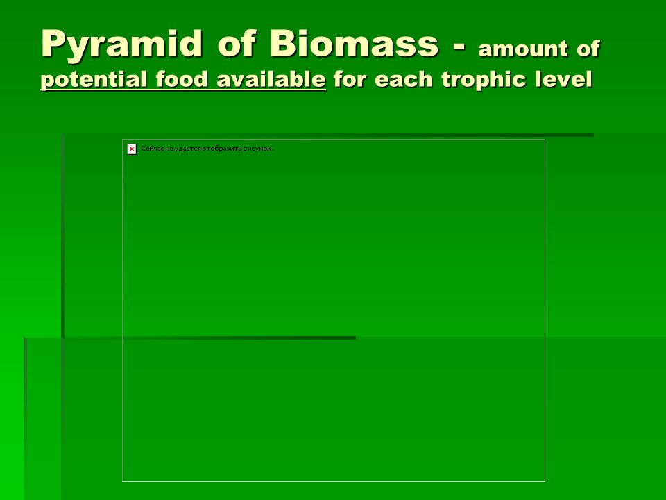 Pyramid of Biomass - amount of potential food available for each trophic level