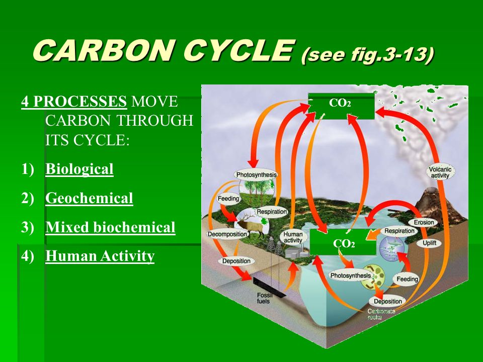 CARBON CYCLE (see fig.3-13) 4 PROCESSES MOVE CARBON THROUGH ITS CYCLE: 1)Biological 2)Geochemical 3)Mixed biochemical 4)Human Activity CO 2