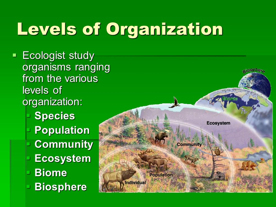 How does Energy flow through an Ecosystem.