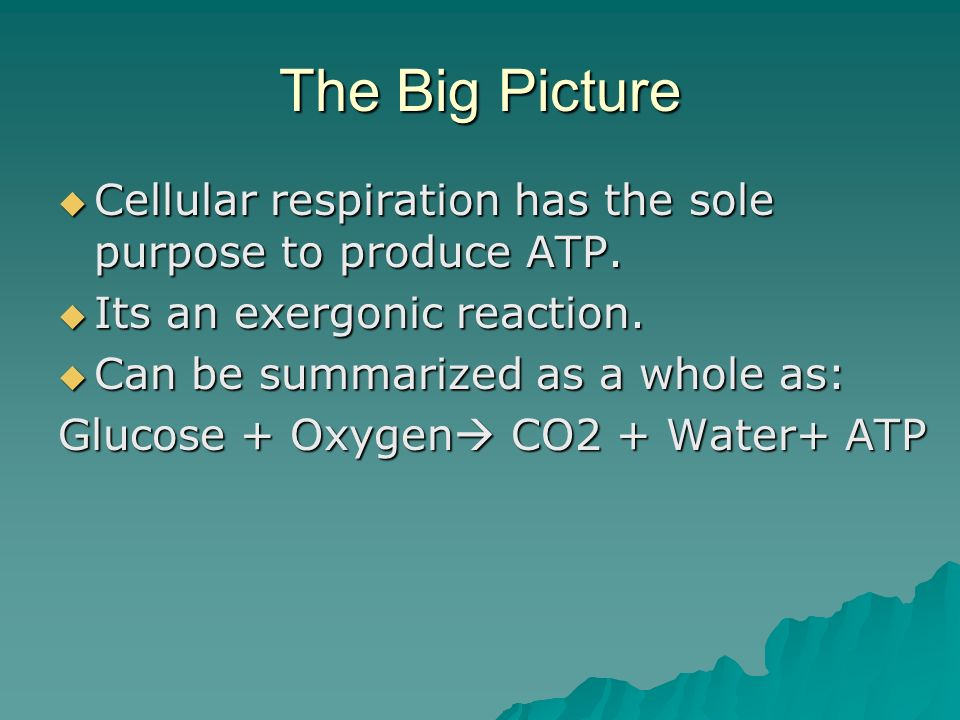 Reminder on ATP ATP (adenosine triphosphate) is a nucleotide with unstable phosphate bonds that the cell hydrolyzes for energy.