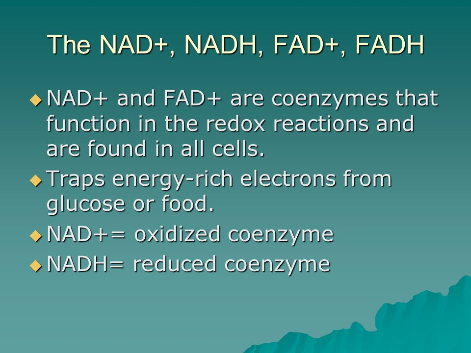The ETC transports electrons from NADH and FADH2 along a transport chain The ETC transports electrons from NADH and FADH2 along a transport chain The respiratory chain is composed of 4 enzyme complexes and carriers called cytochrome c and ubiquinone (Q).