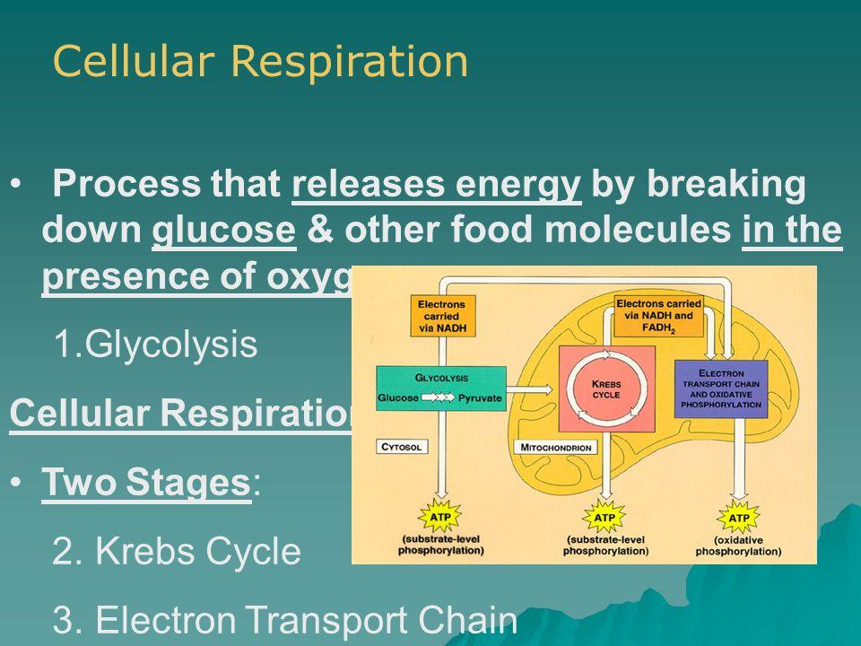 Glyclolysis (per glucose molecule) Takes place in cytosol.